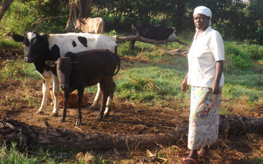 DIARY FARMER ASSISTED